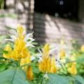 花菜ガーデン(16F14)_2554