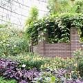 花菜ガーデン(16F14)_2548
