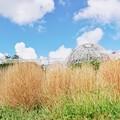 花菜ガーデン(16F14)_2558