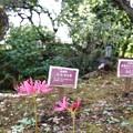花菜ガーデン(16F14)_2560