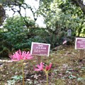 Photos: 花菜ガーデン(16F14)_2560