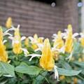 花菜ガーデン(16F14)_2556
