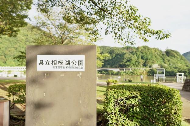 相模湖(試し撮り)_2618