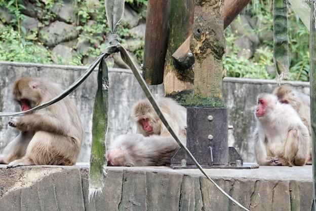 多摩動物公園_3197
