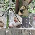 Photos: 多摩動物公園_3197
