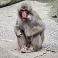 Photos: 多摩動物公園_3198
