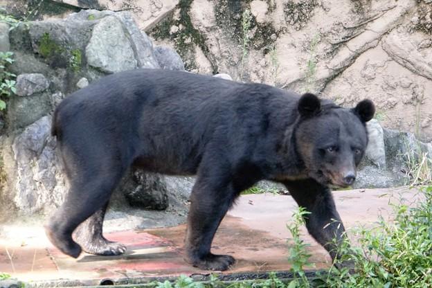 Photos: 多摩動物公園_3199