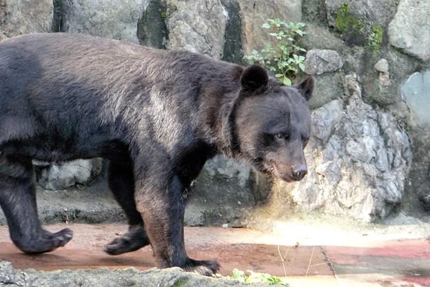 多摩動物公園_3200