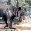 Photos: 多摩動物公園_3200