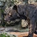 Photos: _多摩動物公園3201