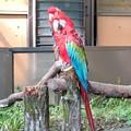 Photos: 多摩動物公園_3203