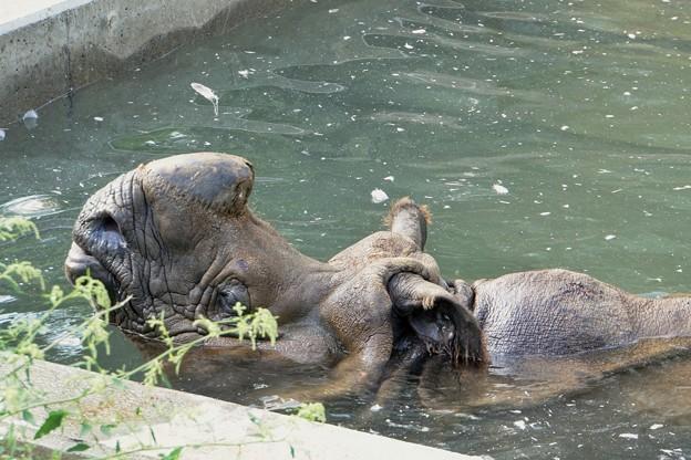 多摩動物公園_3206