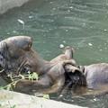 Photos: 多摩動物公園_3206