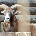 Photos: 多摩動物公園_3207