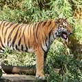 Photos: _多摩動物公園3209