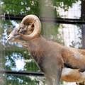 Photos: 多摩動物公園_3211