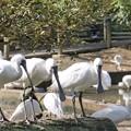 Photos: 多摩動物公園_3212