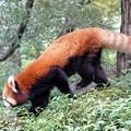 Photos: 多摩動物公園_3296