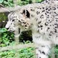 Photos: 多摩動物公園_3318