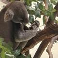 Photos: 多摩動物公園_3319