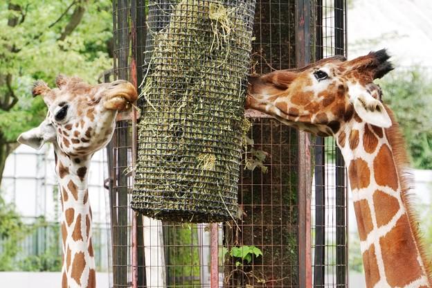 多摩動物公園_3334