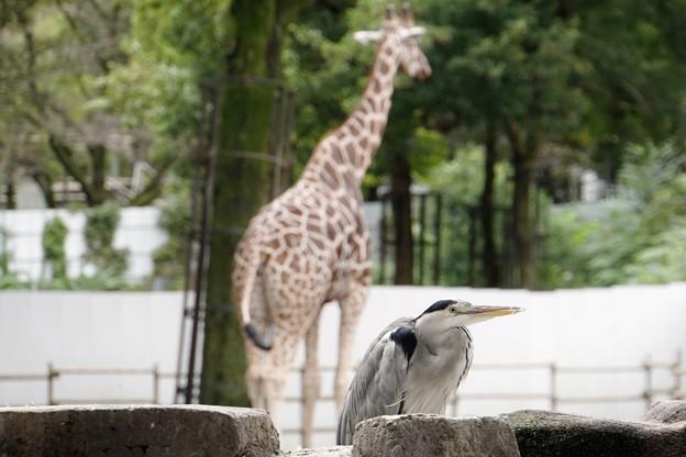 多摩動物公園_3335