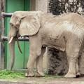 多摩動物公園_3336