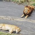 多摩動物公園_3339
