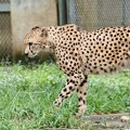 多摩動物公園_3341