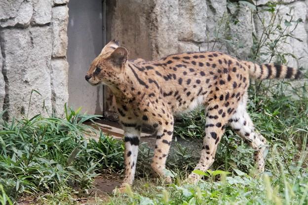 多摩動物公園_3342
