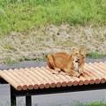 多摩動物公園_3343