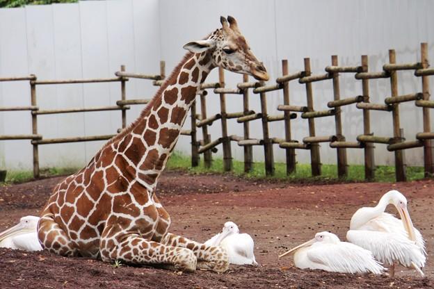 多摩動物公園_3344