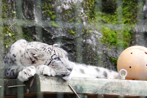 多摩動物公園_3317