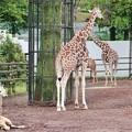 多摩動物公園_3345