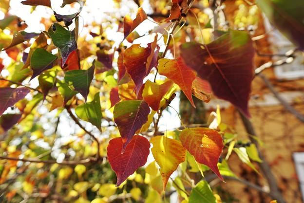 冬の足音:花菜ガーデン_4305