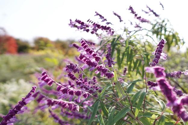 冬の足音:花菜ガーデン_4312