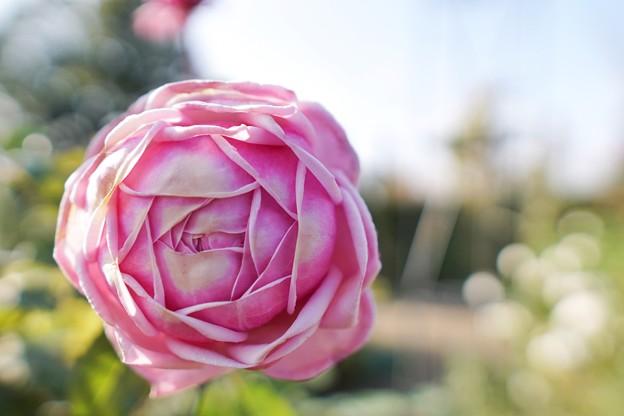 冬の足音:花菜ガーデン_4313