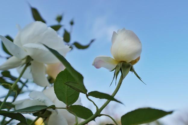 冬の足音:花菜ガーデン_4314