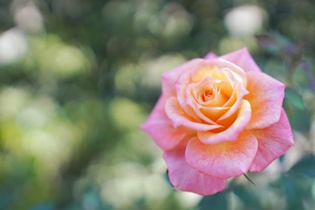 Photos: 冬の足音:花菜ガーデン_4317