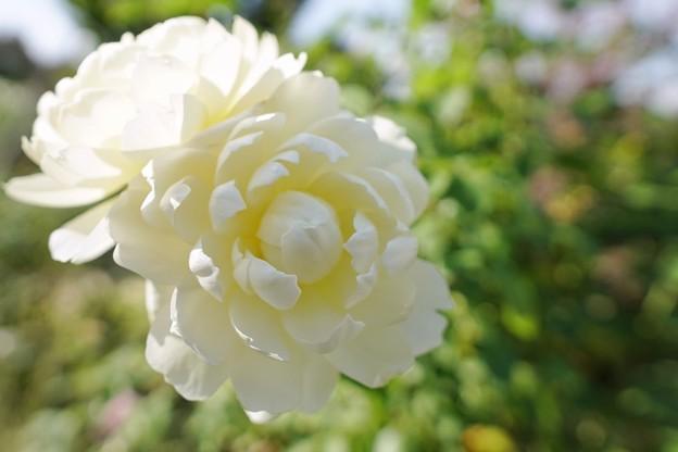 冬の足音:花菜ガーデン_4315