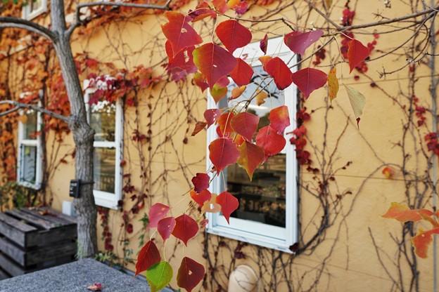 冬の足音:花菜ガーデン_4307