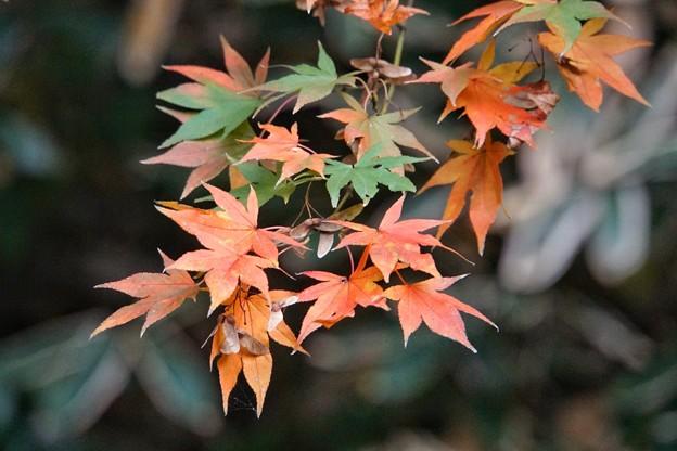 三渓園の紅葉2020_4588