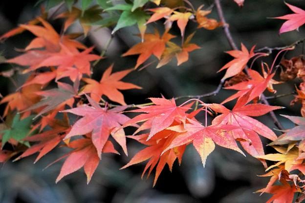 三渓園の紅葉2020_4589