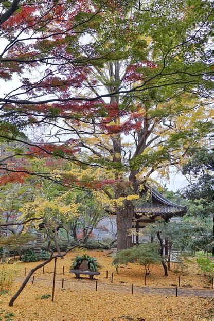 三渓園の紅葉2020_4580