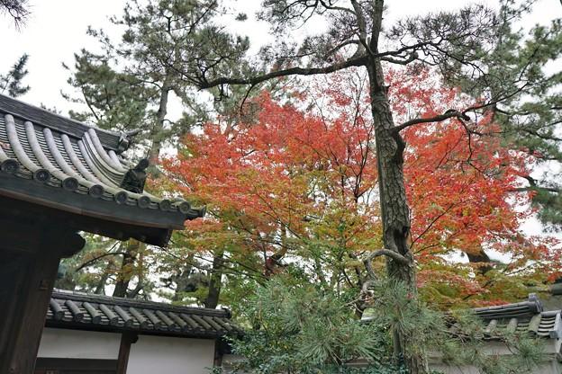 三渓園の紅葉2020_4582