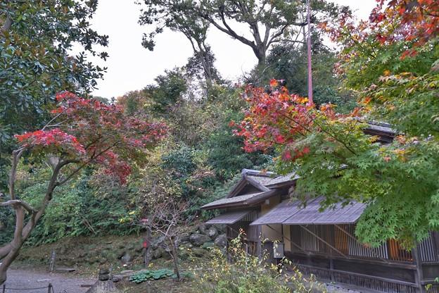 三渓園の紅葉2020_4585