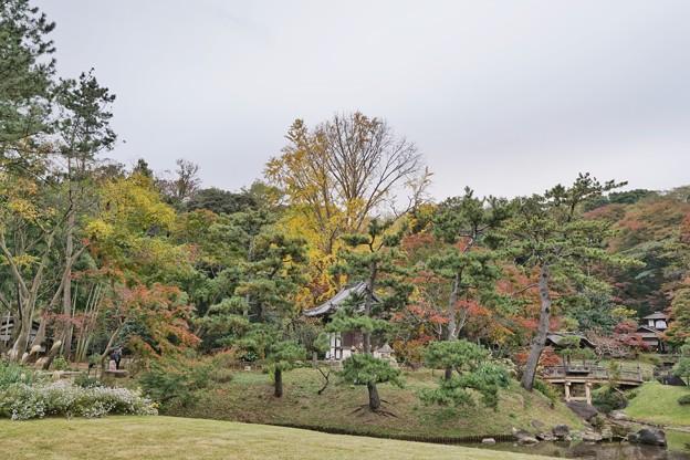 三渓園の紅葉2020_4583