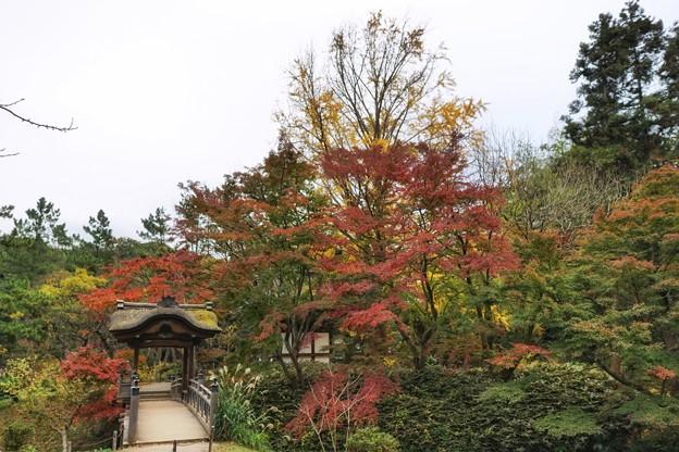 三渓園の紅葉2020_4590