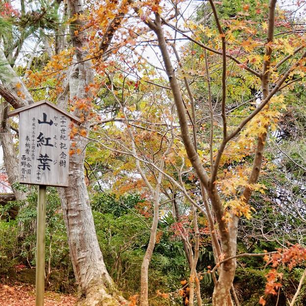 Photos: 成田山@紅葉2020_472