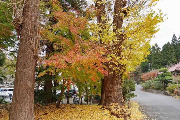 Photos: 成田山@紅葉2020_4730